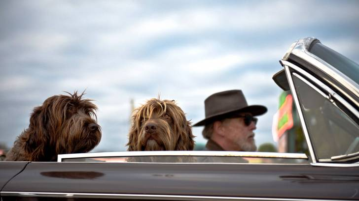 man driving a convertable with 2 dogs enjoying the day