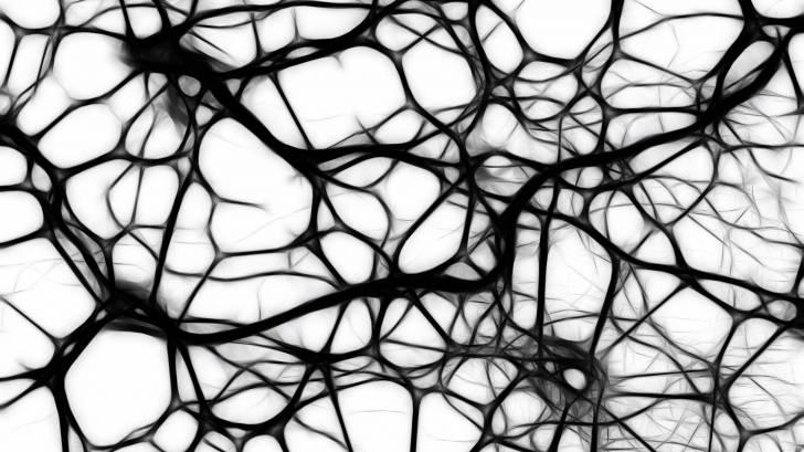 brain neurons abtract
