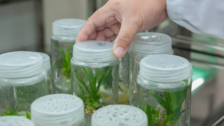 plants in a research lab being grown in plastic containers